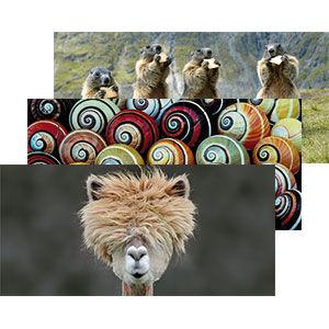 GEO-Postkarten
